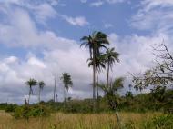 Реликтовый лес под Лагосом (фото А.А. Банщиковой)