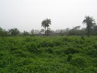 Сельский ландшафт. На пути из Абеокуты в Ибадан (фото Д.А. Халтуриной)