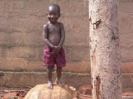 Африканский Ахиллес (фото Т.В. Евгеньевой)
