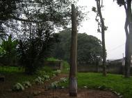 «Посох Оранмийана» – надгробие легендарного правителя Иле-Ифе, основателя династии оба Бенина перед священной рощей, на месте которой, по поверьям йоруба, его отец Одудува создал земную твердь (фото Д.А. Халтуриной)